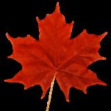 Canada PNP Programs